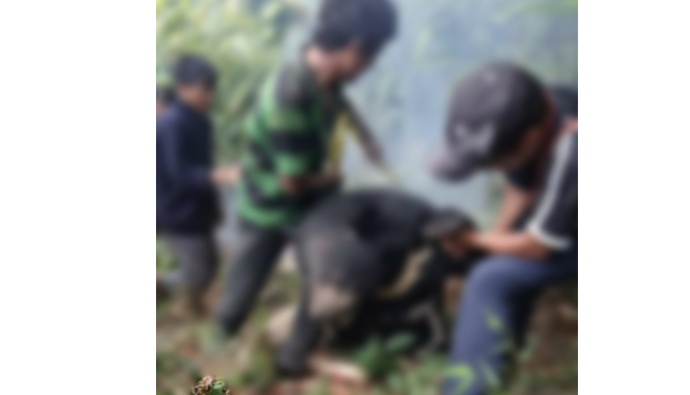 Pregnant bear poacher arrest