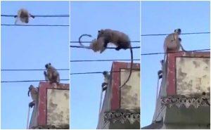 monkey,.