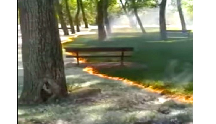 planned park fire video goes viral