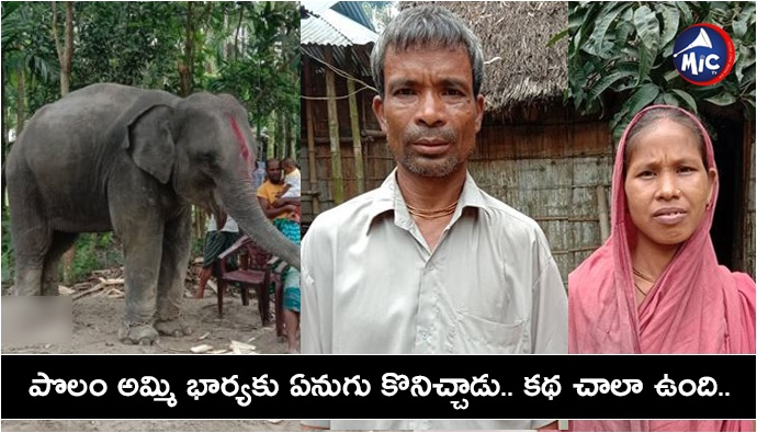 Bangladesh husband purchase elephant after wife claim 'divine order' in dream.