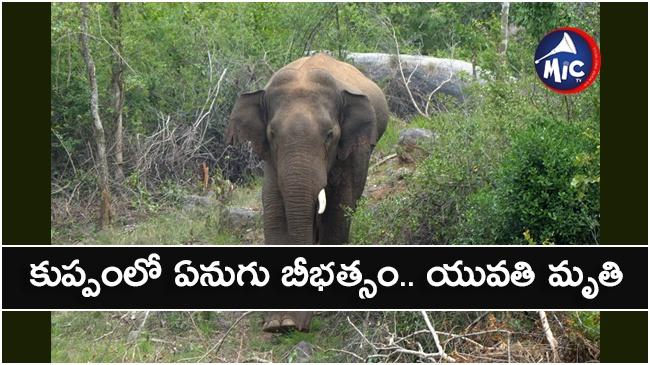 elephantt