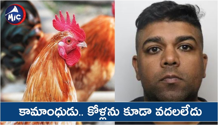 37-year-old Rehan Baig jailed for molesting chickens