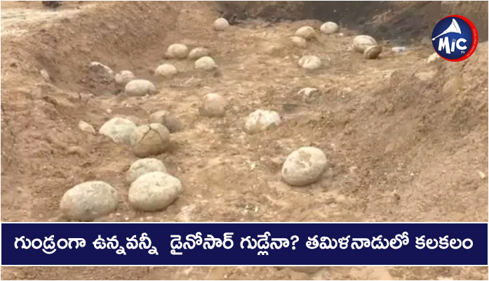 'Dinosaur Eggs' found in Perambalur Tamil Nadu are ammonite sediments