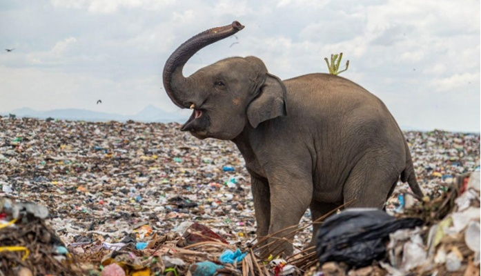 This image of elephant herd wins Royal Society of Biology competition