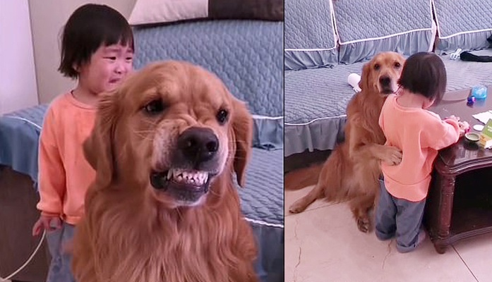Dog barks at toddlers mother