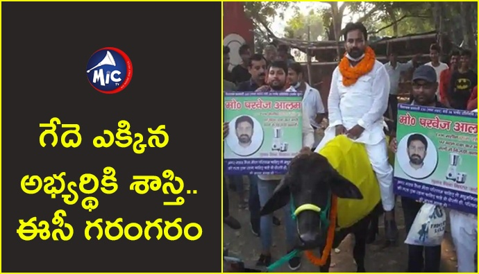Case Booked on Candidate for Riding Buffalo    .jp