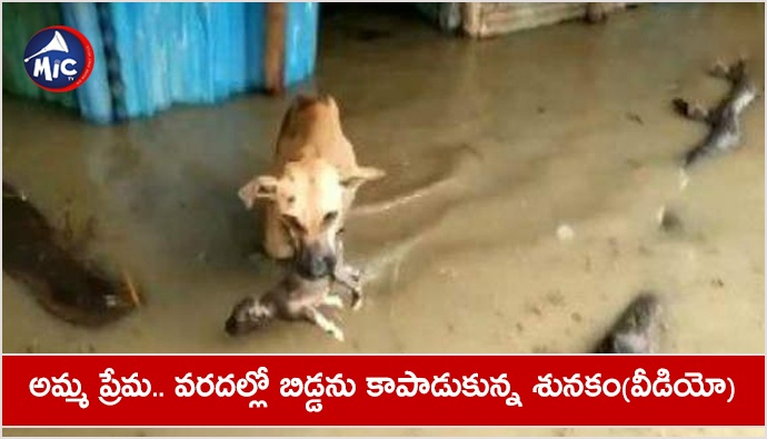 Human or animal, the mother is the mother the dog rescued her child from the flood, see VIDEO.jp
