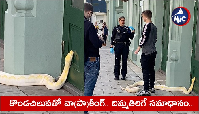 Youth walking python Brighton east Sussex police warns  .